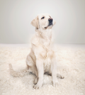 pet stains and carpet stain removing tips