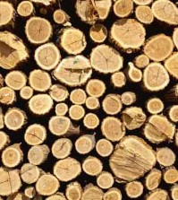 firewood - terms and where to stack, arbor day