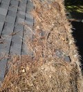 pine needles on a roof