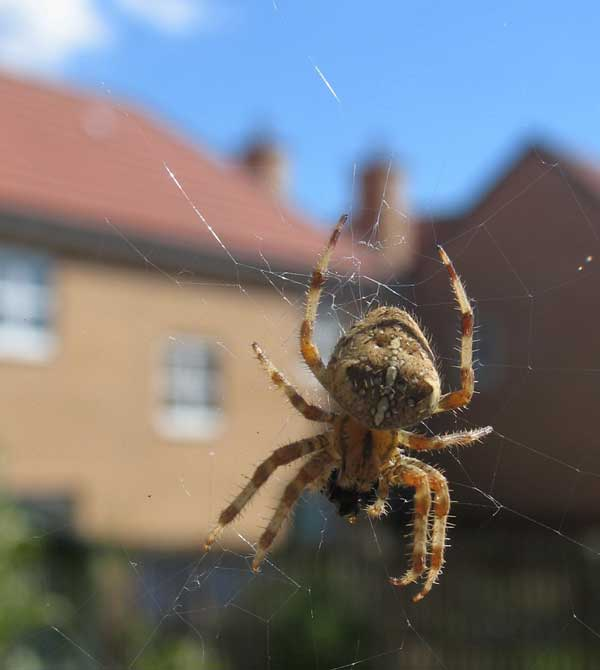 Getting rid of spiders on the house for How to get rid of spiders in the house uk