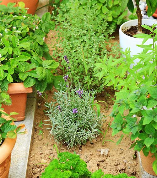 8 criteria to use when choosing plants for your garden for Choosing plants for landscaping