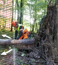 chainsaw to clear debris