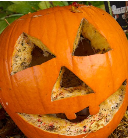 Best_way_to_preserve_pumpkins_Wet_and_Forget