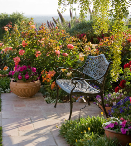 variety of roses to plant
