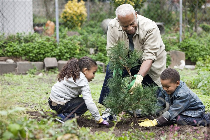 Fall: Best season for planting trees that boost home and